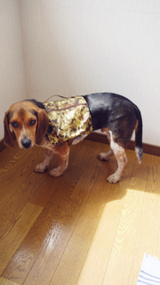 Dog saddle bag