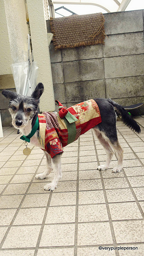 Dog summer kimono