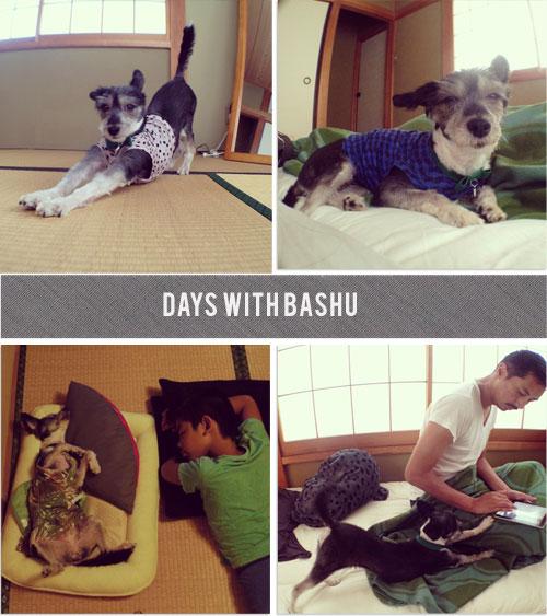 daysbashu01