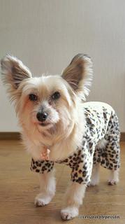 Dog onesies