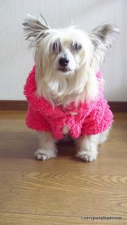Dog fur bolero