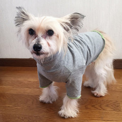 Dog turtleneck T-shirt