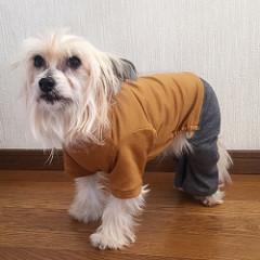 Dog overall