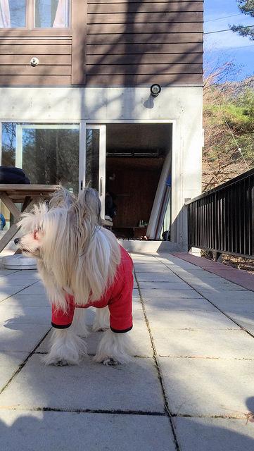 Dog down jacket